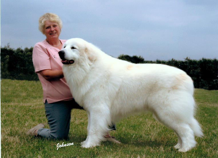Pyrenean Mountain Dog Breed Pro Pictures